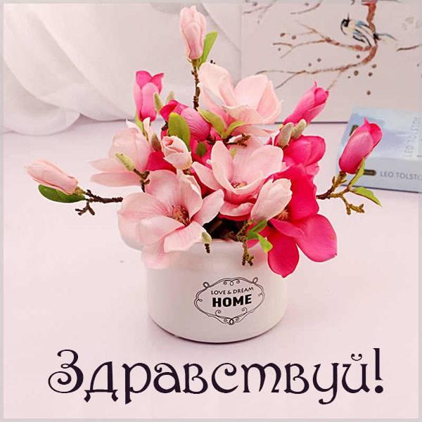 Картинка на тему здравствуй - скачать бесплатно на otkrytkivsem.ru
