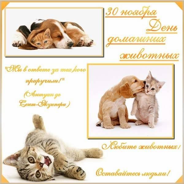 Картинка на всемирный день домашних животных 30 ноября - скачать бесплатно на otkrytkivsem.ru