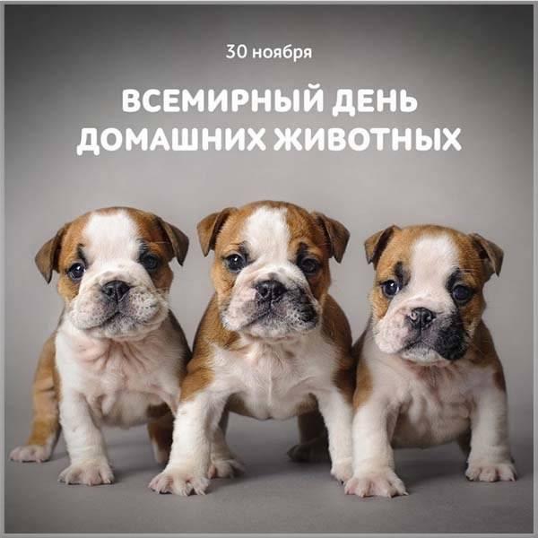 Картинка на всемирный день домашних животных - скачать бесплатно на otkrytkivsem.ru
