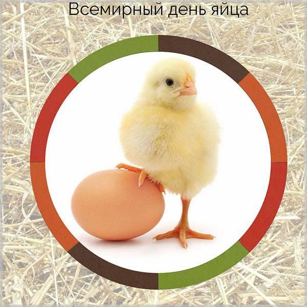 Картинка на всемирный день яйца - скачать бесплатно на otkrytkivsem.ru