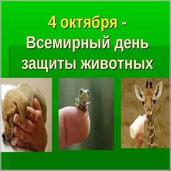 Картинка на всемирный день животных 4 октября - скачать бесплатно на otkrytkivsem.ru