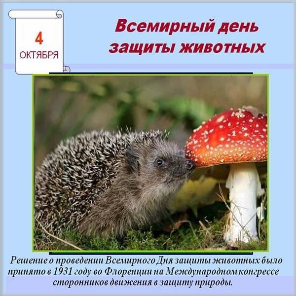 Картинка на всемирный день животных - скачать бесплатно на otkrytkivsem.ru