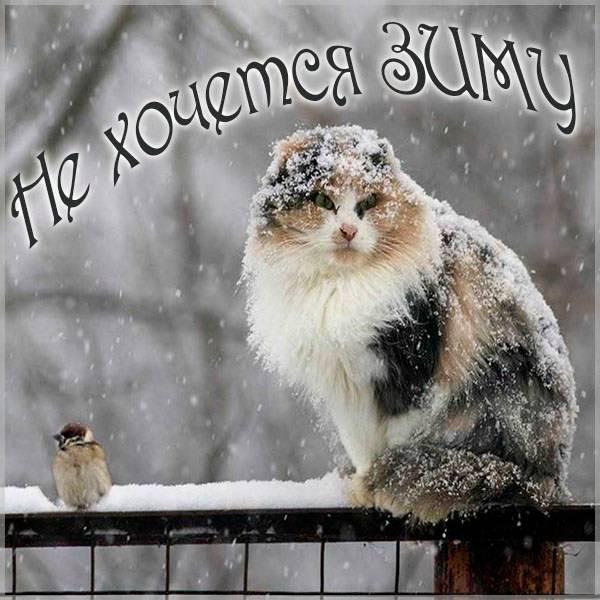 Картинка не хочется зиму - скачать бесплатно на otkrytkivsem.ru