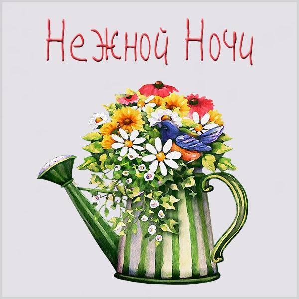 Картинка нежной ночи с цветами - скачать бесплатно на otkrytkivsem.ru