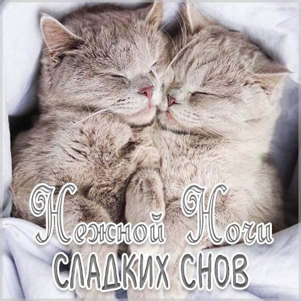 Картинка нежной ночи сладких снов новая - скачать бесплатно на otkrytkivsem.ru