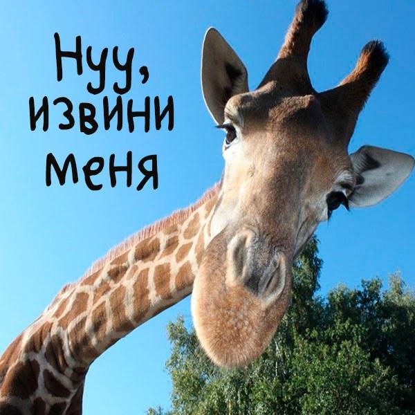 Картинка ну извини меня - скачать бесплатно на otkrytkivsem.ru