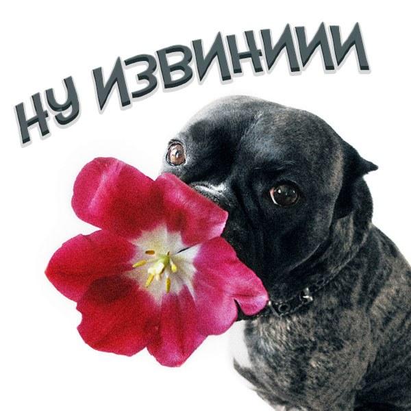 Картинка ну извини - скачать бесплатно на otkrytkivsem.ru