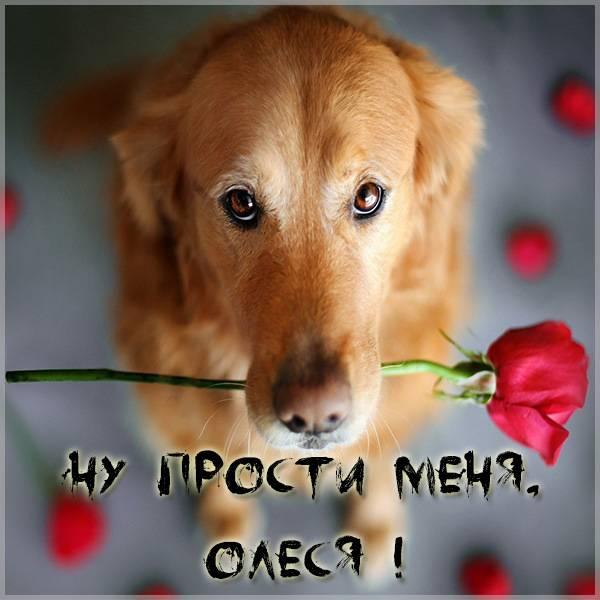 Картинка Олеся прости меня - скачать бесплатно на otkrytkivsem.ru