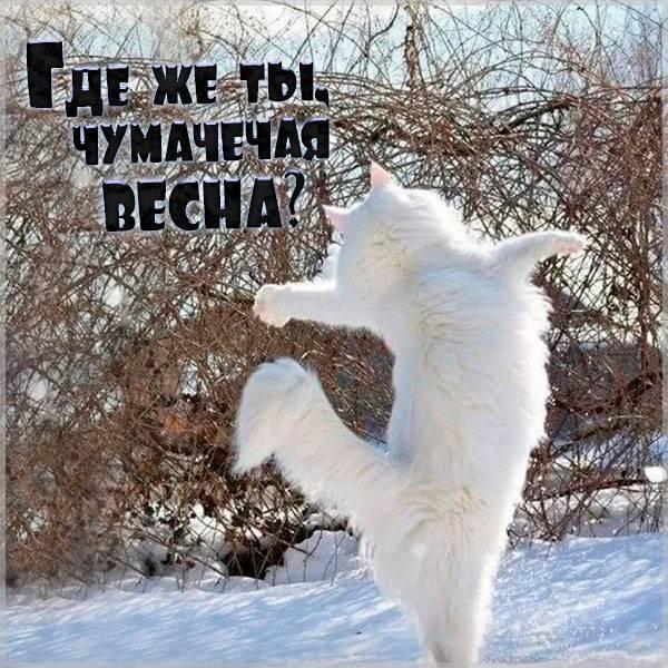 Картинка ожидание весны прикольная - скачать бесплатно на otkrytkivsem.ru