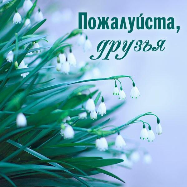 Картинка пожалуйста друзья - скачать бесплатно на otkrytkivsem.ru