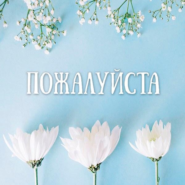 Картинка пожалуйста очень красивая - скачать бесплатно на otkrytkivsem.ru