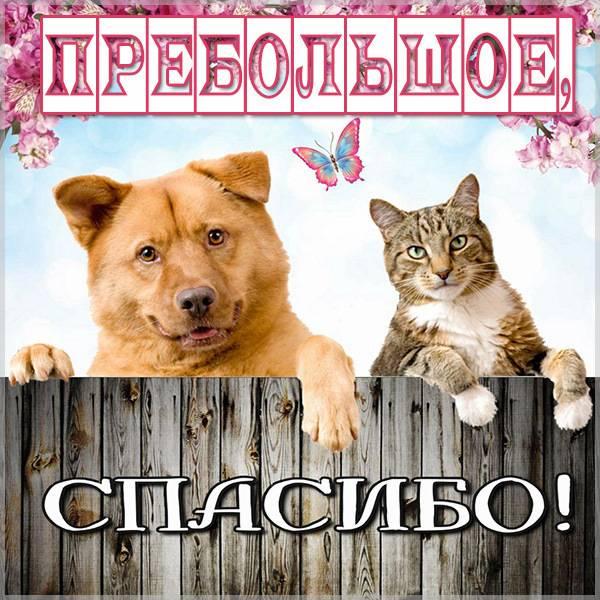 Картинка пребольшое спасибо - скачать бесплатно на otkrytkivsem.ru