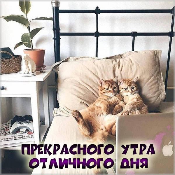 Картинка прекрасного утра и отличного дня прикольная - скачать бесплатно на otkrytkivsem.ru