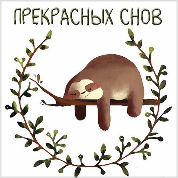 Картинка прекрасных снов прикольная - скачать бесплатно на otkrytkivsem.ru