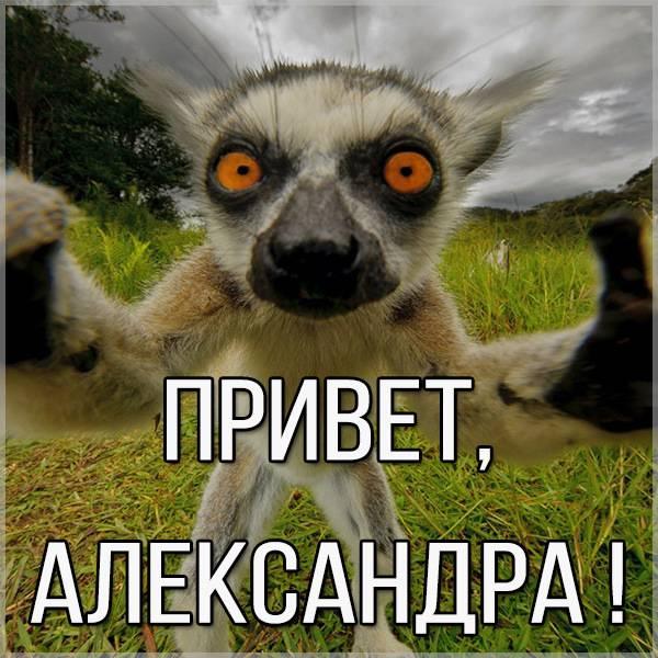 Картинка привет Александра - скачать бесплатно на otkrytkivsem.ru