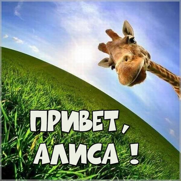 Картинка привет Алиса - скачать бесплатно на otkrytkivsem.ru