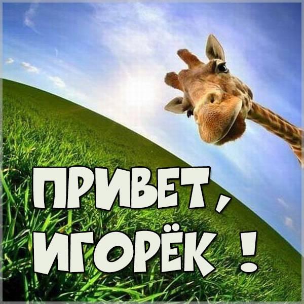 Картинка привет Игорек - скачать бесплатно на otkrytkivsem.ru