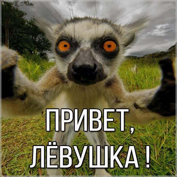 Картинка привет Левушка - скачать бесплатно на otkrytkivsem.ru