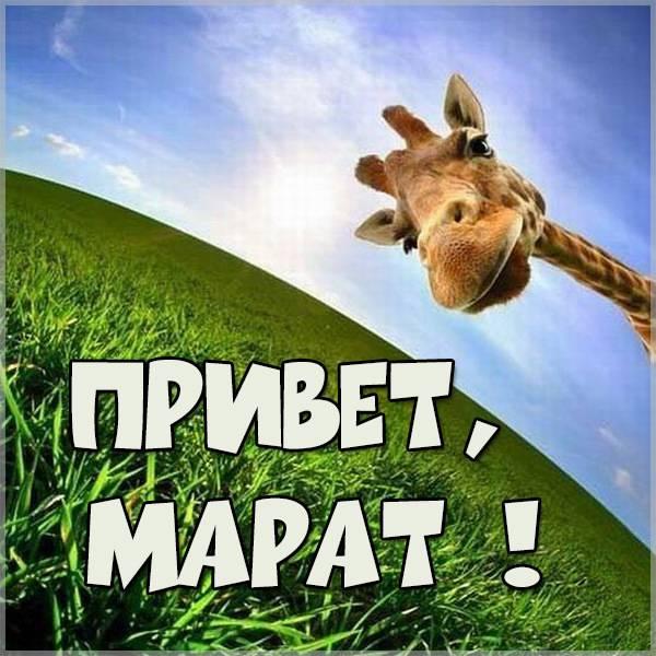 Картинка привет Марат - скачать бесплатно на otkrytkivsem.ru