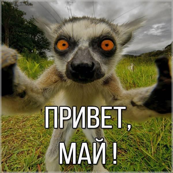 Картинка привет Май - скачать бесплатно на otkrytkivsem.ru