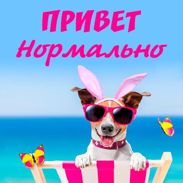 Картинка привет нормально - скачать бесплатно на otkrytkivsem.ru