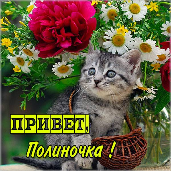 Картинка привет Полиночка - скачать бесплатно на otkrytkivsem.ru