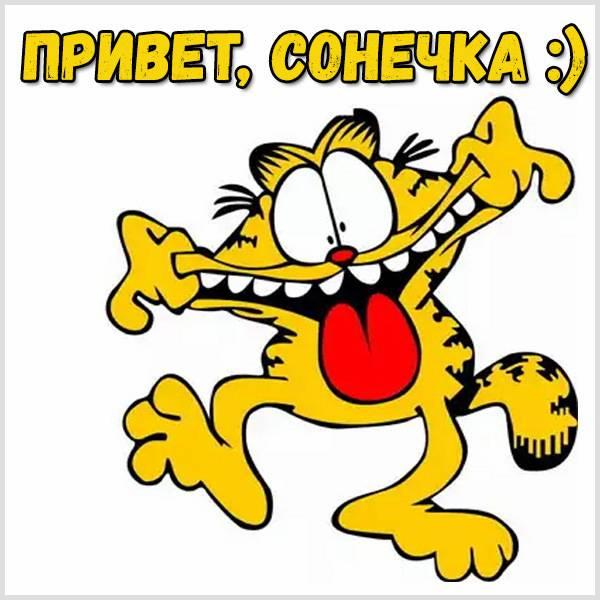 Картинка привет Сонечка - скачать бесплатно на otkrytkivsem.ru
