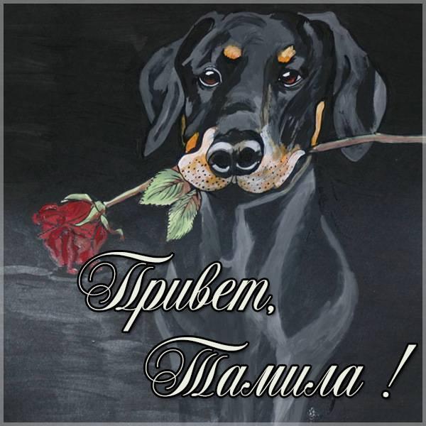 Картинка привет Тамила - скачать бесплатно на otkrytkivsem.ru