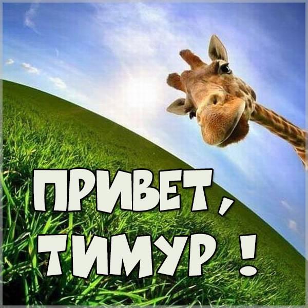 Картинка привет Тимур - скачать бесплатно на otkrytkivsem.ru