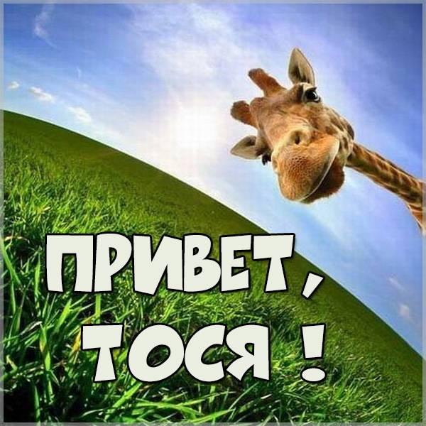 Картинка привет Тося - скачать бесплатно на otkrytkivsem.ru