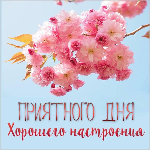 Картинка приятного дня и хорошего настроения девушке - скачать бесплатно на otkrytkivsem.ru