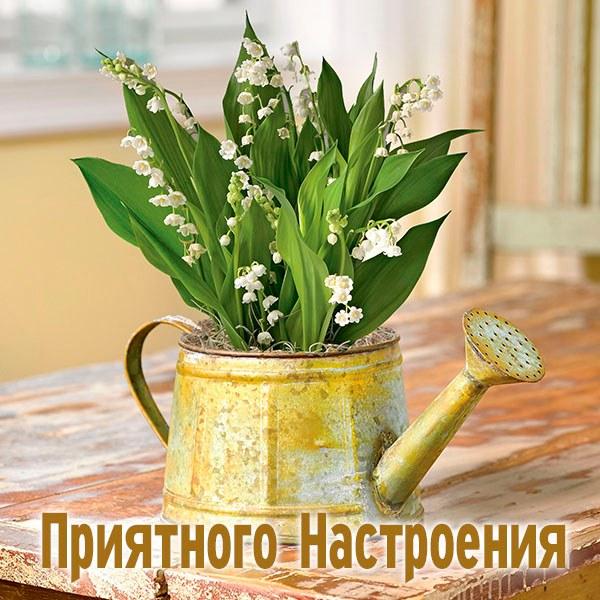 Картинка приятного настроения - скачать бесплатно на otkrytkivsem.ru