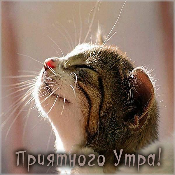 Картинка приятного утра прикольная - скачать бесплатно на otkrytkivsem.ru