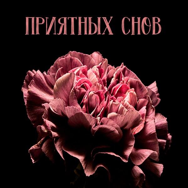 Картинка приятных снов девушке - скачать бесплатно на otkrytkivsem.ru