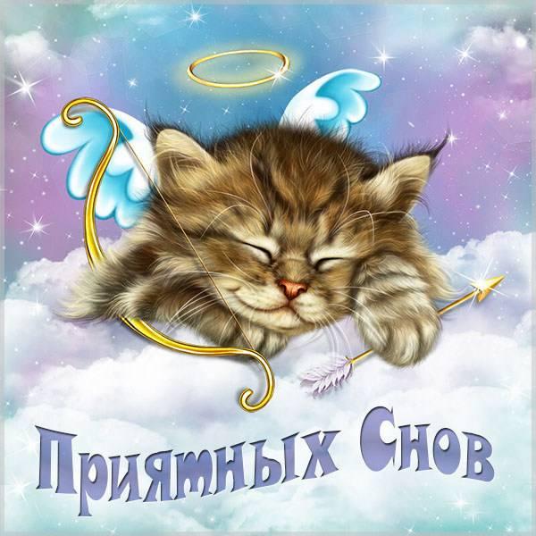 Картинка приятных снов с котом - скачать бесплатно на otkrytkivsem.ru