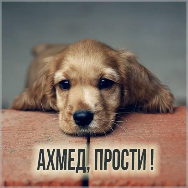 Картинка прости Ахмед - скачать бесплатно на otkrytkivsem.ru