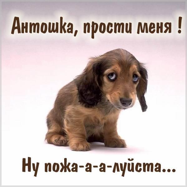 Картинка прости меня Антошка - скачать бесплатно на otkrytkivsem.ru