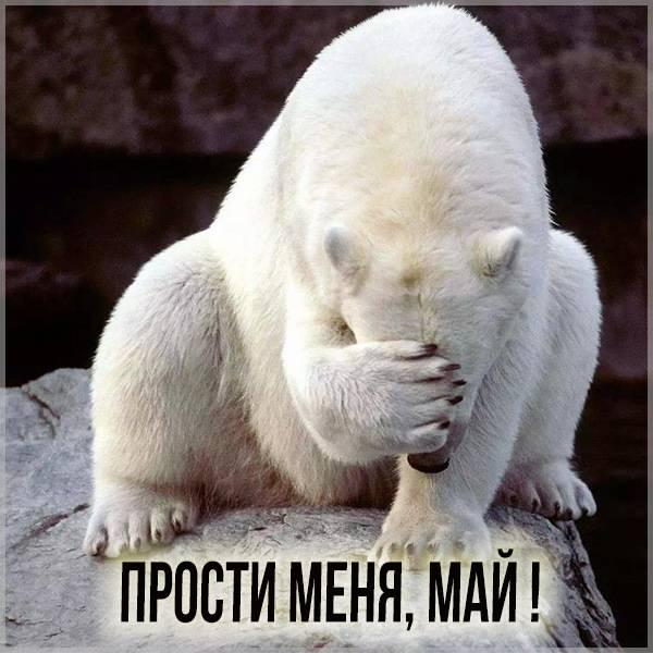 Картинка прости меня Май - скачать бесплатно на otkrytkivsem.ru