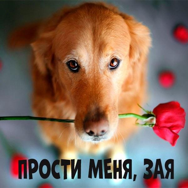 Картинка прости меня зая - скачать бесплатно на otkrytkivsem.ru