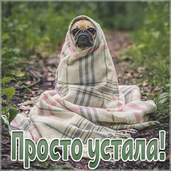 Картинка просто устала - скачать бесплатно на otkrytkivsem.ru