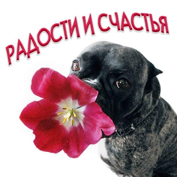 Картинка радости и счастья прикольная - скачать бесплатно на otkrytkivsem.ru