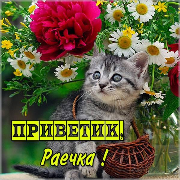 Картинка Раечка приветик - скачать бесплатно на otkrytkivsem.ru