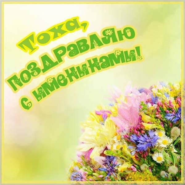 Картинка с днем Тохи - скачать бесплатно на otkrytkivsem.ru