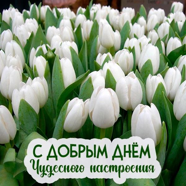 Картинка с добрым днем и настроением - скачать бесплатно на otkrytkivsem.ru
