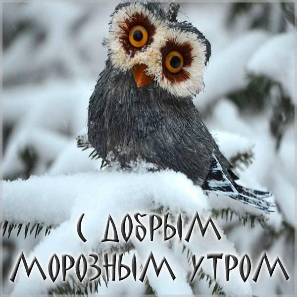 Картинка с добрым морозным утром прикольная смешная - скачать бесплатно на otkrytkivsem.ru