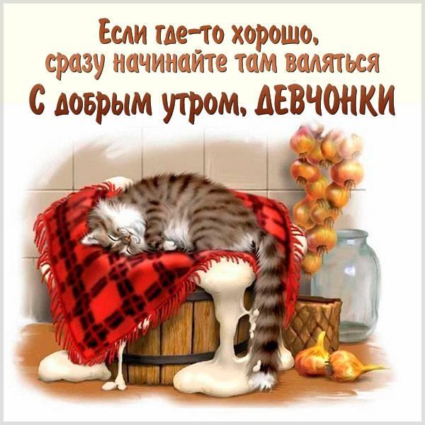 Картинка с добрым утром девчонки прикольная смешная - скачать бесплатно на otkrytkivsem.ru
