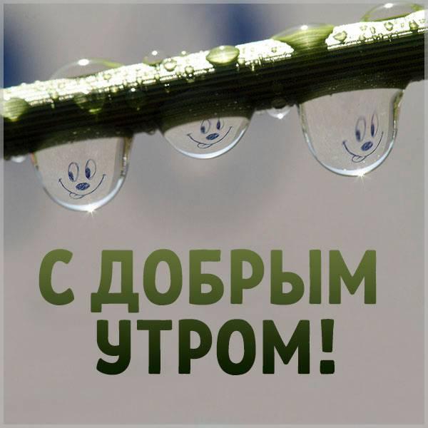 Картинка с добрым утром прикольная смешная женщине - скачать бесплатно на otkrytkivsem.ru