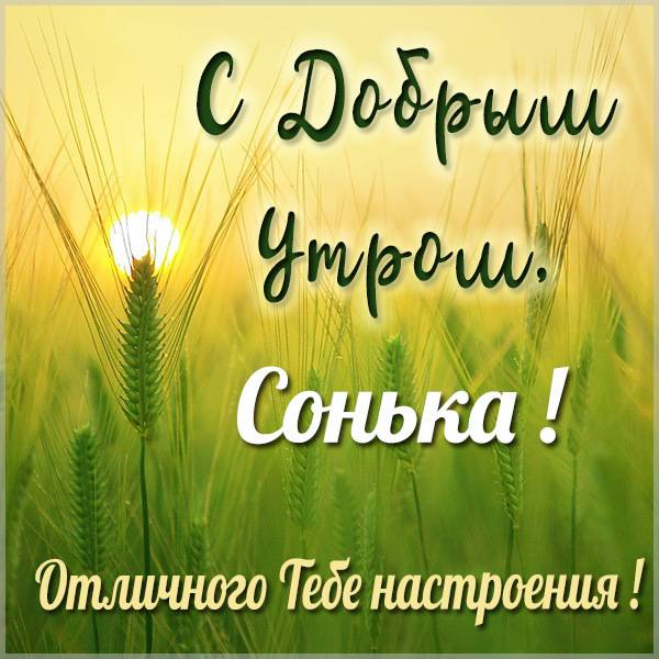 Картинка с добрым утром Сонька - скачать бесплатно на otkrytkivsem.ru