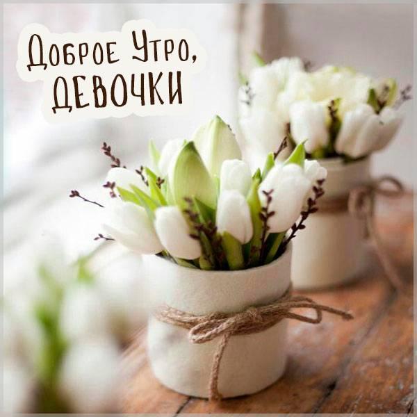 Картинка с приколом доброе утро девочки - скачать бесплатно на otkrytkivsem.ru