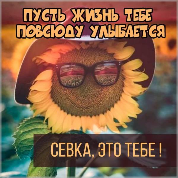 Картинка Севка это тебе - скачать бесплатно на otkrytkivsem.ru